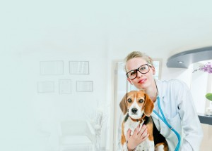 home_vet_offer_bg2